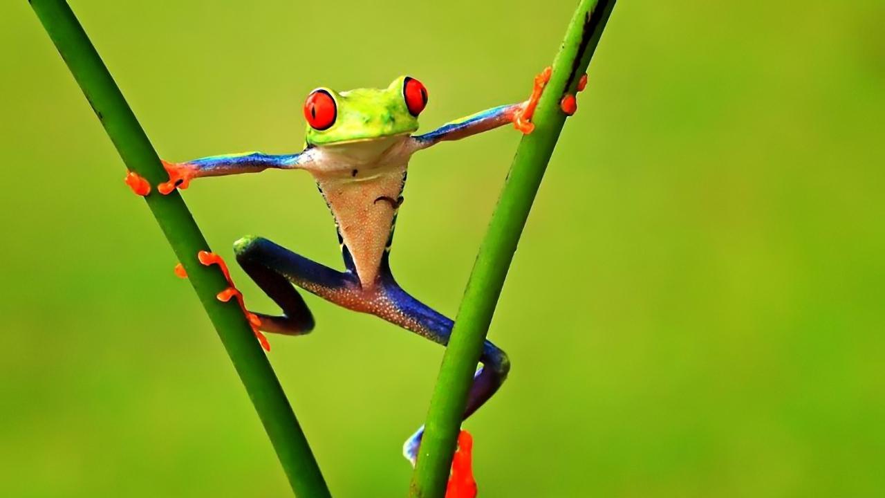 Bright Frog