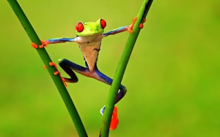 Bright Frog Background for Android, iPhone and iPad