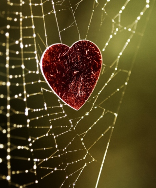 Heart And Spider Web Picture for Nokia Asha 311