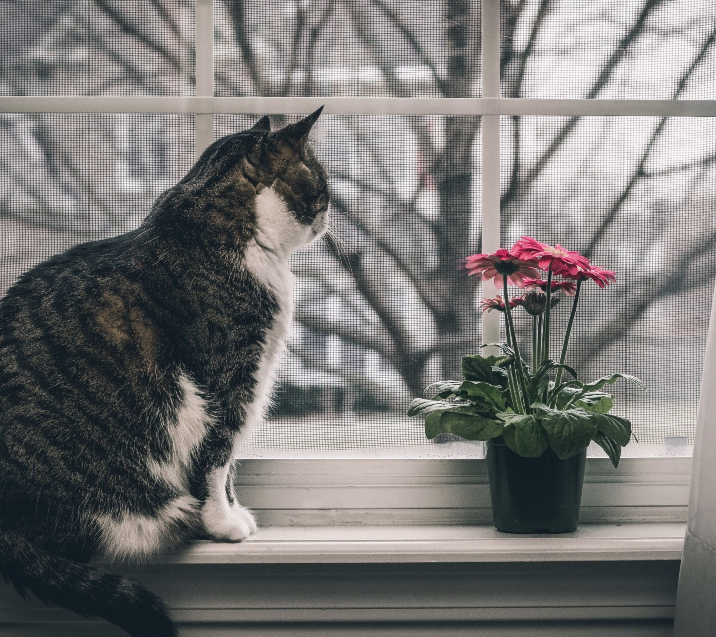Sfondi Cat on Window 1440x1280