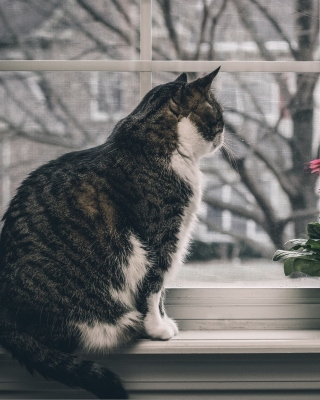 Cat on Window - Fondos de pantalla gratis para Nokia X1-00
