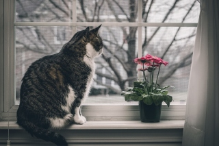Cat on Window Background for 1080x960