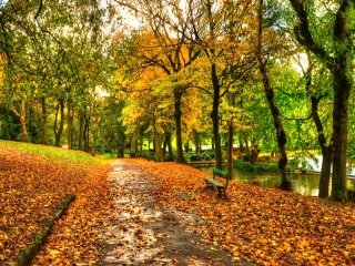 Autumn In New York Central Park for Nokia Asha 200