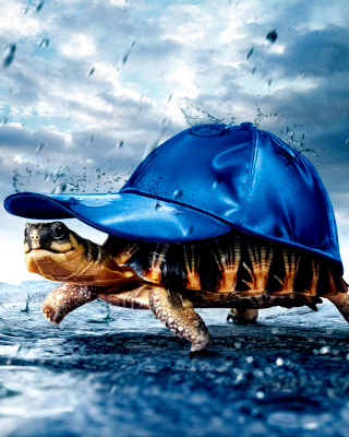 Funny Turtle Wallpaper for HTC Titan