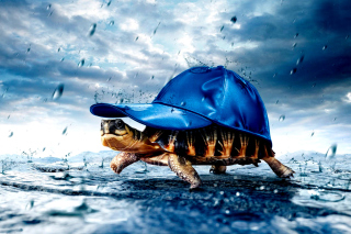 Funny Turtle Picture for Android, iPhone and iPad