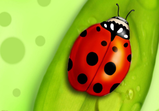 Ladybug Picture for Android, iPhone and iPad