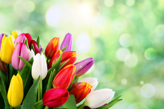 Bouquet of colorful tulips sfondi gratuiti per cellulari Android, iPhone, iPad e desktop