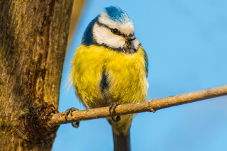 Yellow Bird In Zoo Background for Android, iPhone and iPad