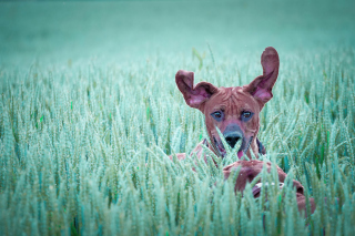 Dog Having Fun In Grass - Obrázkek zdarma