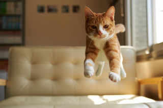 Cat Jump Picture for Android, iPhone and iPad