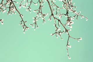 Beginning Of Spring Wallpaper for Samsung I9080 Galaxy Grand