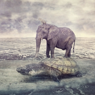 Elephant and Turtle Wallpaper for iPad 3