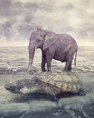 Elephant and Turtle sfondi gratuiti per 320x480