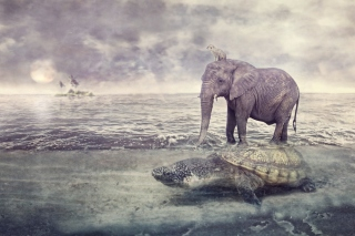 Kostenloses Elephant and Turtle Wallpaper für Widescreen Desktop PC 1920x1080 Full HD