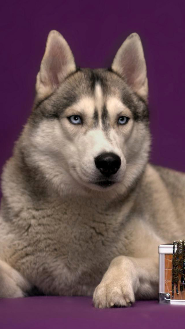 Siberian Husky screenshot #1 750x1334
