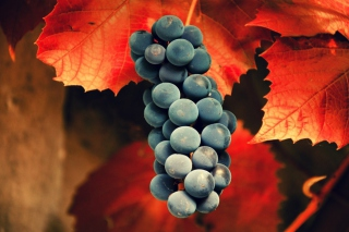Grapes Picture for Android, iPhone and iPad
