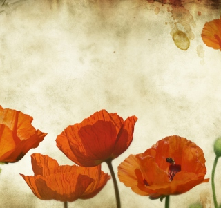 Poppies Vinatge Wallpaper for iPad mini