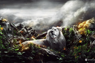 Lion Art Picture for Android, iPhone and iPad