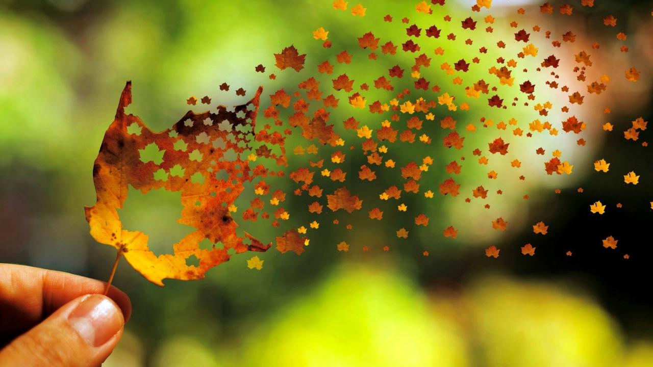 Autumn Love Leaf