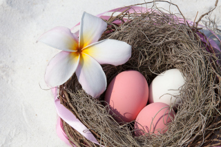 Easter Eggs Picture for 480x400