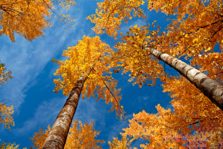 Free Rusty Trees And Blue Sky Picture for Android, iPhone and iPad