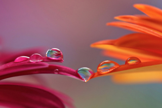 Morning Dew Background for Android, iPhone and iPad