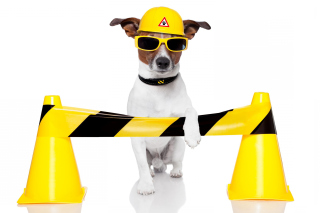 Kostenloses Working Dog Wallpaper für Android, iPhone und iPad