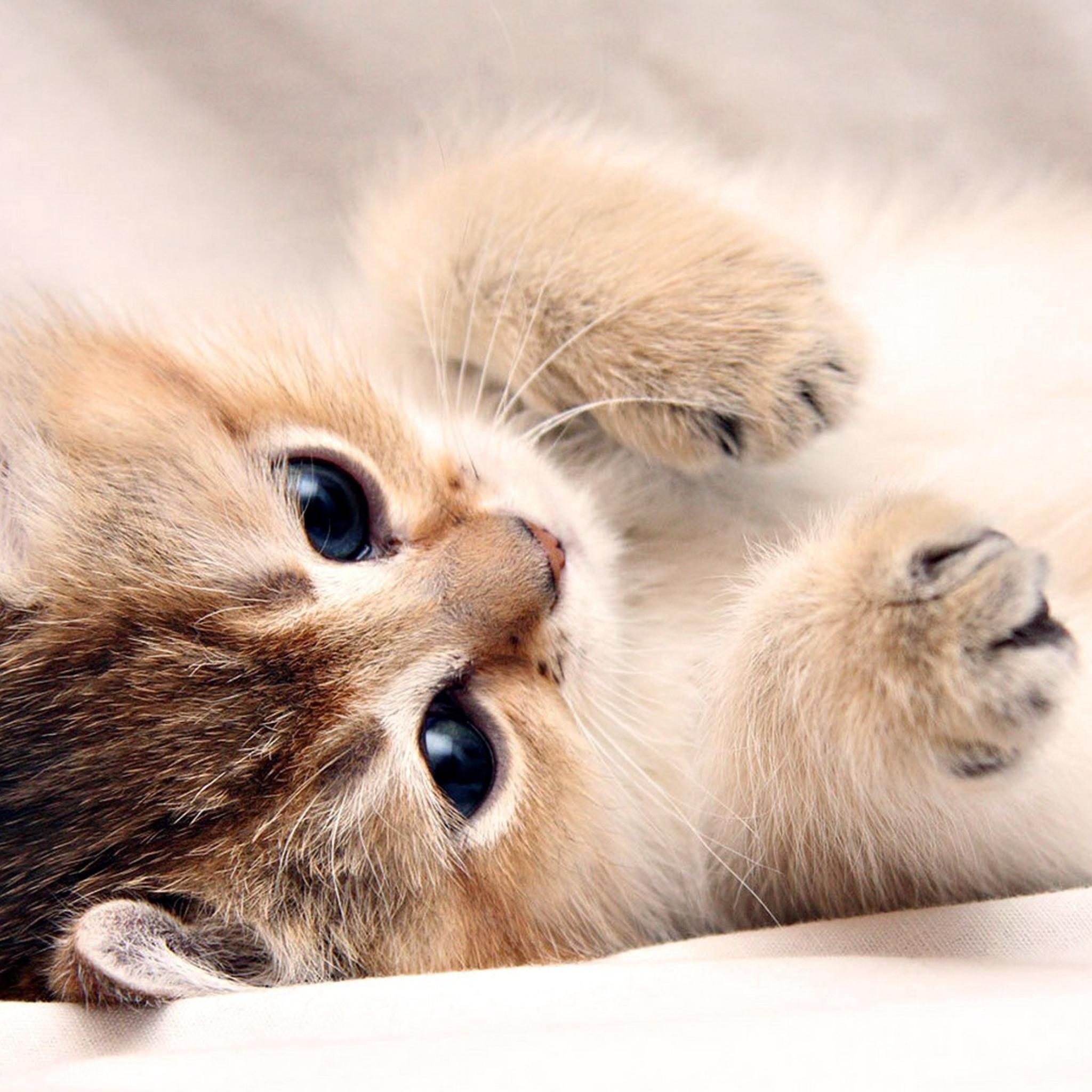 котенок взгляд милый kitten view cute скачать