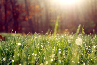 Grass And Morning Dew Background for Android, iPhone and iPad