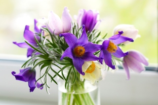 Purple Pulsatilla Flowers Picture for Android, iPhone and iPad