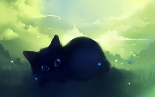 Black Cat sfondi gratuiti per cellulari Android, iPhone, iPad e desktop