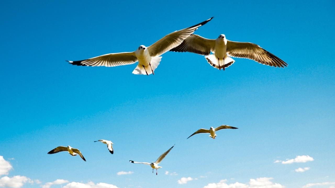 Pigeons Flying In Blue Sky