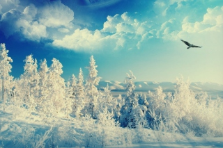 Bird In Sunny Winter Sky Picture for Android, iPhone and iPad
