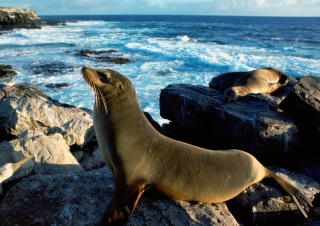 Seal And Stones Picture for Android, iPhone and iPad