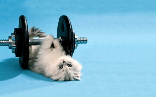 Cat Working Out - Fondos de pantalla gratis