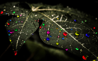 Dark Leaf Picture for Android, iPhone and iPad