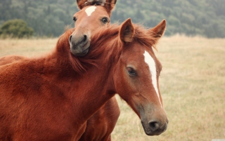 Horses Wallpaper for Android, iPhone and iPad