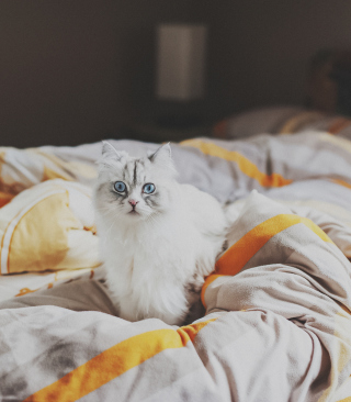 White Cat With Blue Eyes In Bed sfondi gratuiti per Nokia Lumia 925