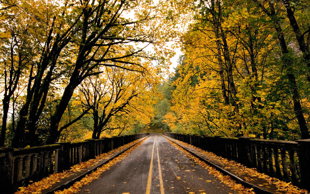 Screenshot №1 pro téma Wet autumn road 1280x800