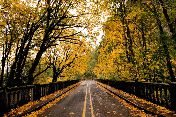 Das Wet autumn road Wallpaper