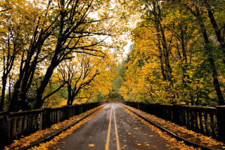 Wet autumn road Background for Android, iPhone and iPad