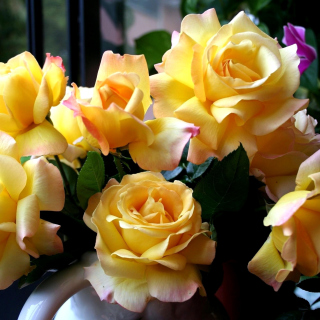 Yellow roses sfondi gratuiti per iPad mini