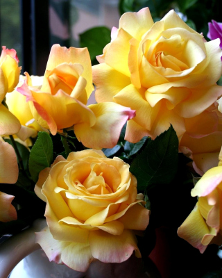 Yellow roses Background for Nokia C1-01