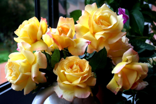Yellow roses Background for Android, iPhone and iPad