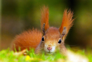 Funny Little Squirrel sfondi gratuiti per 480x400