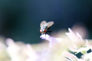 Fly Macro Background for Android, iPhone and iPad