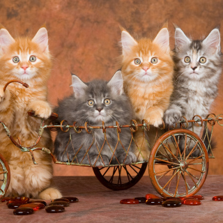 Free Young Kittens Picture for 208x208