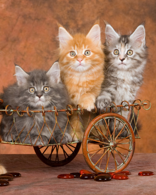Young Kittens Background for Nokia 5800 XpressMusic