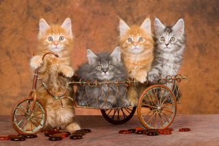 Young Kittens Background for Android, iPhone and iPad