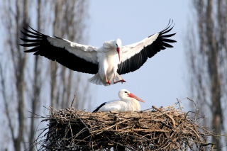Stork Picture for Android, iPhone and iPad
